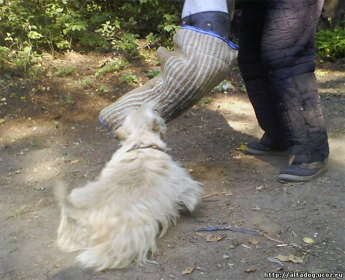 http://alfadog.ucoz.ru/_fr/0/0832428.jpg